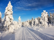 Cross country ski trail north of Oslo Norway