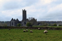 Crumbling abbey in Quin Ireland