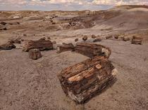 Crystal Forest - Petrified Wood National Park Arizona