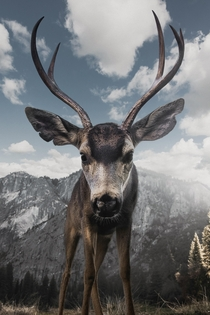 Curious Buck in Yosemite National Park by Jeff Brenner