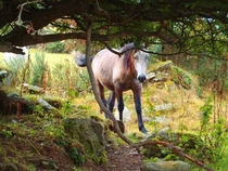 Curious Horse in Ireland