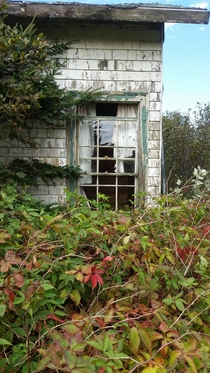 Curtains still hanging in the window of this long-abandoned camp cabin in Nova Scotia