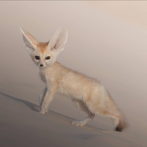 Cuteness overload Despite its appearance the fennec fox is a ferocious predator perfectly adapted for surviving in the harsh environment of the Sahara