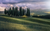 Cypress trees of Tuscany