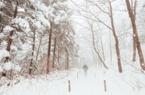 Daegwallyeong mountain pass in blizzard Taebaek Mountains Gangwon Province South Korea