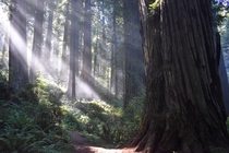 Damnation Creek Trail Redwoods NP CA USA