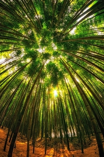 Damyang Bamboo Forest South Korea  Photo by Aaron Choi