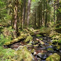 Dappled light on the Salmon River trail OR