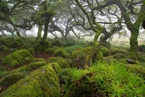Dartmoor Forest United Kingdom by Michael Kirste