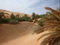 Date Palms at the Gaberoun Oasis in Libya