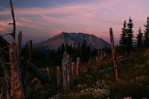 Dawn in the blast zone of Mt Saint Helens