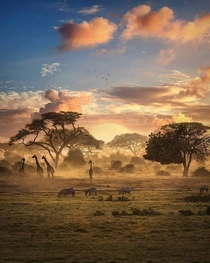 Dawn on the savannah A truly majestic photo showing animals such as zebras and giraffes taken in Tarangire national park Tanzania