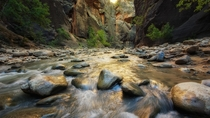 Daybreak - morning light is filtered upon the flowing water of The Narrows - Zion National Park Utah
