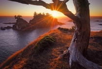 Days Ember - the sun setting behind a gnarly tree on the coast of Oregons Samuel H Boardman State Park  by John Williams