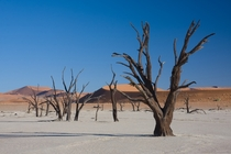 Dead acacia trees in Dead Vlei near Sossusvlei Namibia  by Ikiwaner