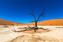 Dead Acacia trees in Deadvlei inside Namib-Naukluft Park Namibia  Frank Fuer