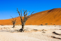 Dead trees Deadvlei Namibia by my sister