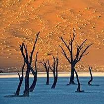 Dead trees on the Deadvlei clay pan - Number  Sossusvlei Namibia