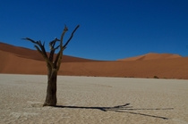 Deadvlei Namibia looking like a desktop background
