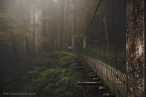 Decaying footbridge in the Cloud Forest of Alishan Mountains Taiwan  by Morgan Kinkel