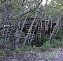 Decaying log cabin I found by a partially collapsed mineshaft
