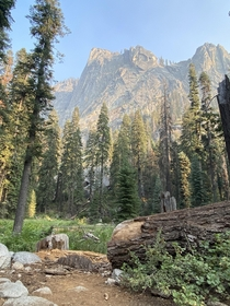 Decided to stop to get this shot while trail running Tokopah Valley in Sequoia National Park yesterday evening