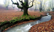 Deep in the moss forest Spain  Photo by Jose Ramon Irusta