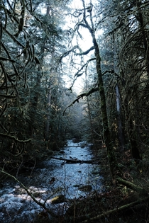 Deep in the rainforest of Goldstream BC