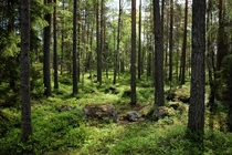 Deep in the Swedish forest everything smells green