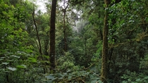 Deep Rain-forests of North East India   x