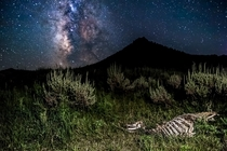 Deer skeleton under the Milky Way Phippsburg CO