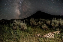 Deer Skeleton Under the Milky Way Phipsburg CO
