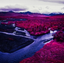 Denali Alaska  Photo by Daniel Zvereff with Kodak Aerochrome infrared-sensitive false-color reversal film