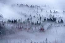 Dense fog blankets Yosemite Valley allowing only the tallest trees to peek through
