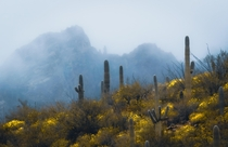 Desert Fog in the Catalina Mountains