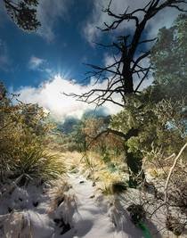 Desert Snow at Big Bend