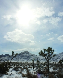 Desert Snow Field - Joshua Tree National Park California - x -