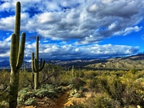 Desert Winter - Douglas Springs trail - Tucson AZ  x