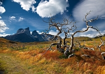 Dessicated trees in Torres del Paine NP Chile  photo by Andrey Maximov