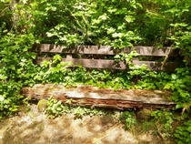 Deteriorating Bench