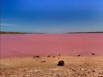 Didnt think the Hutt Lagoon West Australia - aka Pink Lake - would really be this pink
