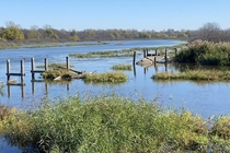 Dilapidated marsh boardwalk