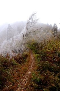 Discovered where fall ended and winter began Appalachian Trail