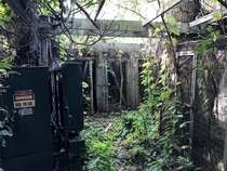 Disneys abandoned River Country resort island