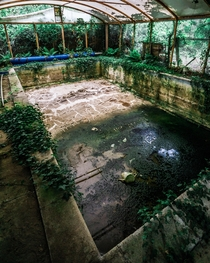 Disused pool in a mansion since