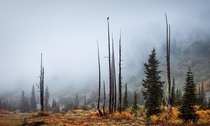 Doesnt get much moodier than dead trees fog and a lone raven Bench Lake Hike Mount Rainier