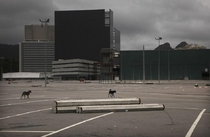 Dogs walk in the empty Olympic Park in Rio de Janeiro Photo Mario Tama