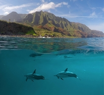 Dolphins under the waters near Na Pali Coast Kauai  x-post from rTravel_HD