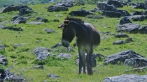 Donkey in the Pyrenees