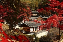Dosan Seowon surrounded by maple leaves North Gyeongsang Province South Korea